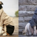 Rover Dog Coats