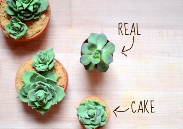 DIY Succulent Cupcakes by Pixel Whisk