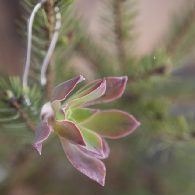 Succulent Ornament by Flora Grubb